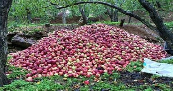 اعتصام لمزارعي التفاح في الشوف وجزين لدفع باقي المستحقات