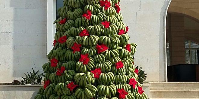 شجرة ميلادية من الموز في الدامور