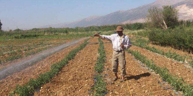 بناء الإقتصاد السليم يبدأ بدعم الزراعة