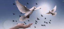 رسالة البابا فرنسيس بمناسبة اليوم العالمي للسلام ٢٠١۹