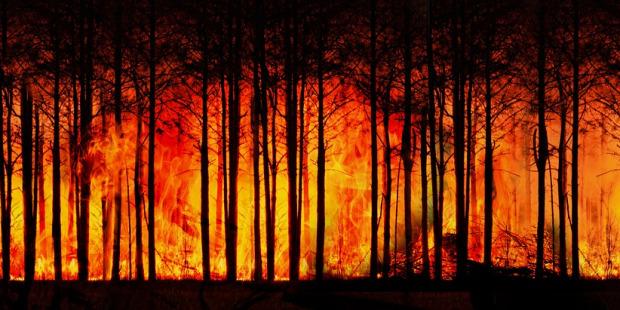 رئة الأرض تحترق والبابا فرنسيس يدعو العالم إلى التحرّك