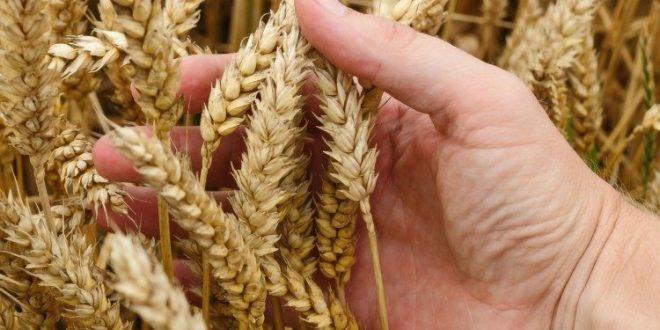 نوبل السلام لبرنامج الأغذية العالمي تشديد على أهمية القضاء على الجوع بأفعال ملموسة