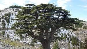 لبنانيون من أجل الكيان